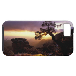 NA, USA, Arizona, Tucson, Sunset and lone iPhone 5 Covers