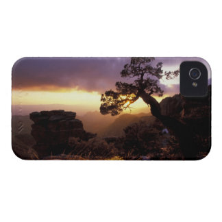 NA, USA, Arizona, Tucson, Sunset and lone Case-Mate iPhone 4 Case