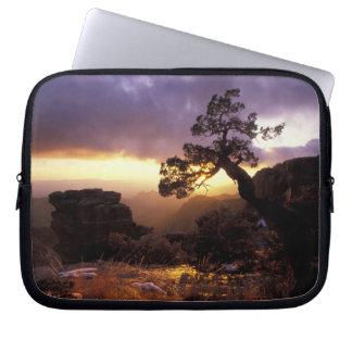 NA, USA, Arizona, Tucson, Sunset and lone Computer Sleeve