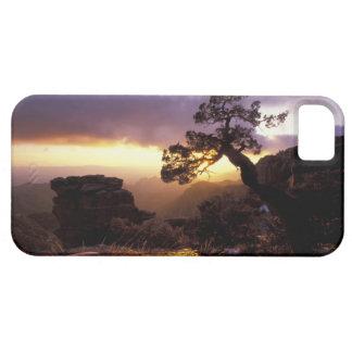 NA, USA, Arizona, Tucson, Sunset and lone iPhone SE/5/5s Case