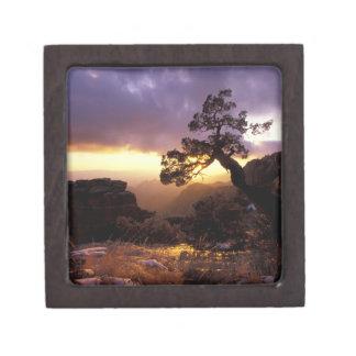 NA, USA, Arizona, Tucson, Sunset and lone Keepsake Box