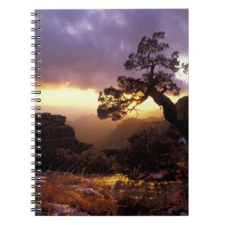 NA, USA, Arizona, Tucson, Sunset and lone Notebook