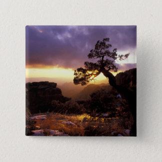 NA, USA, Arizona, Tucson, Sunset and lone Pinback Button