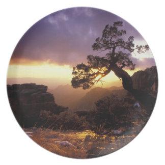 NA, USA, Arizona, Tucson, Sunset and lone Plate