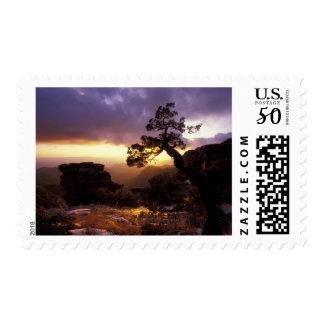 NA, USA, Arizona, Tucson, Sunset and lone Postage
