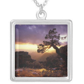 NA, USA, Arizona, Tucson, Sunset and lone Silver Plated Necklace