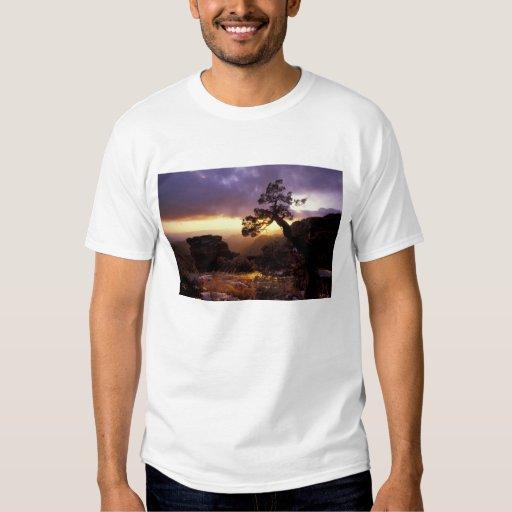 NA, USA, Arizona, Tucson, Sunset and lone T-Shirt