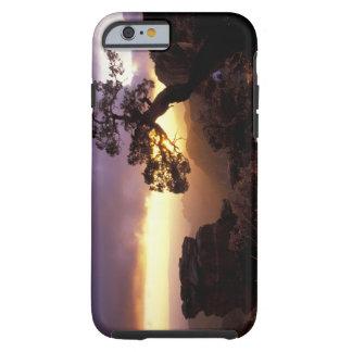 NA, USA, Arizona, Tucson, Sunset and lone Tough iPhone 6 Case
