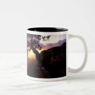 NA, USA, Arizona, Tucson, Sunset and lone Two-Tone Coffee Mug