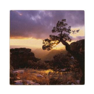 NA, USA, Arizona, Tucson, Sunset and lone Wood Coaster