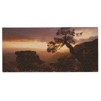 NA, USA, Arizona, Tucson, Sunset and lone Wood Flash Drive