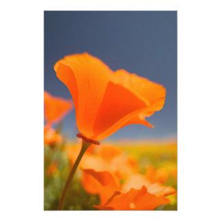 NA, USA, CA, Lancaster, Antelope Valley, CA Photo Print