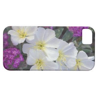NA, USA, California, Anza Borrego Desert State iPhone SE/5/5s Case