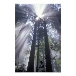 NA, USA, California. Del Norte Coast State 2 Photo Print