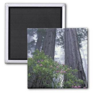NA USA California Del Norte Coast State Park 2 Fridge Magnets