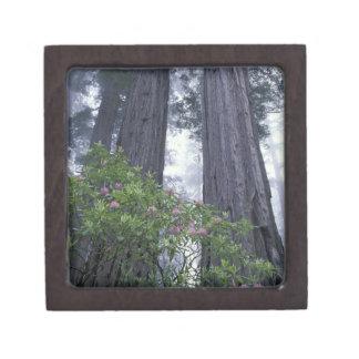 NA, USA, California. Del Norte Coast State Park. 2 Premium Trinket Box
