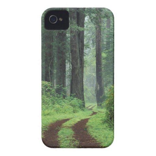 NA, USA, California. Del Norte Coast State Park. 3 Blackberry Bold Covers