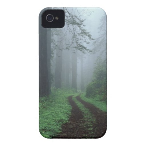 NA, USA, California. Del Norte Coast State Park. Case-Mate Blackberry Case