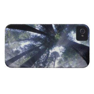 NA USA California Del Norte Redwoods State Blackberry Bold Cases