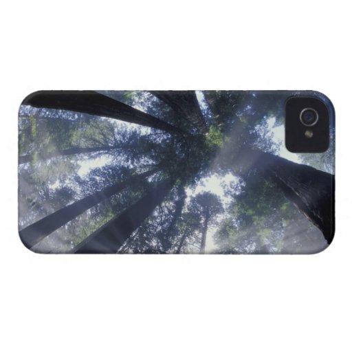 NA, USA, California, Del Norte Redwoods State Blackberry Bold Cases