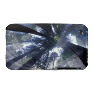 NA USA California Del Norte Redwoods State iPhone 3 Covers