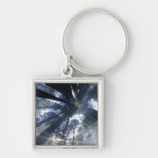 NA USA California Del Norte Redwoods State Keychain