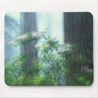 NA, USA, California, Del Norte Redwoods State Mouse Pad
