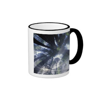 NA USA California Del Norte Redwoods State Coffee Mugs