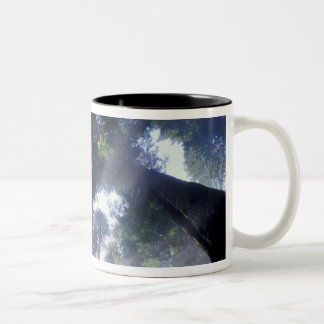 NA USA California Del Norte Redwoods State Mugs