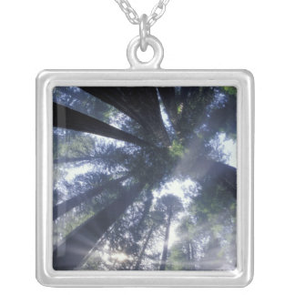 NA USA California Del Norte Redwoods State Necklaces