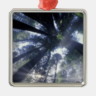 NA USA California Del Norte Redwoods State Christmas Tree Ornaments
