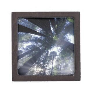 NA, USA, California, Del Norte Redwoods State Premium Trinket Boxes