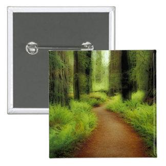 NA, USA, California, Jedediah Smith Redwoods Pinback Buttons