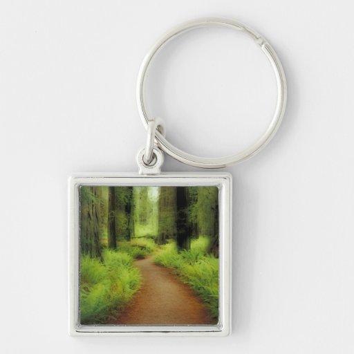 NA, USA, California, Jedediah Smith Redwoods Key Chain