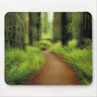 NA, USA, California, Jedediah Smith Redwoods Mouse Pad