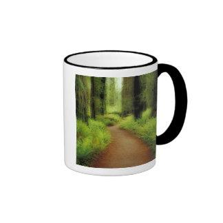 NA, USA, California, Jedediah Smith Redwoods Mugs