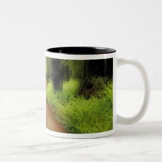 NA, USA, California, Jedediah Smith Redwoods Coffee Mug