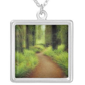 NA, USA, California, Jedediah Smith Redwoods Jewelry