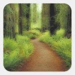 NA, USA, California, Jedediah Smith Redwoods Sticker