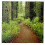 NA, USA, California, Jedediah Smith Redwoods Tile