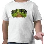 NA, USA, California, Jedediah Smith Redwoods Tshirts