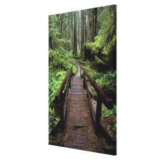 NA, USA, California, Jedidiah Smith Redwoods Canvas Print