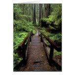 NA, USA, California, Jedidiah Smith Redwoods Greeting Card