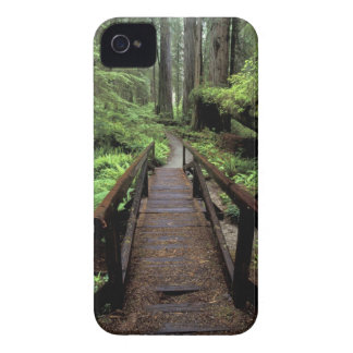 NA, USA, California, Jedidiah Smith Redwoods iPhone 4 Cover