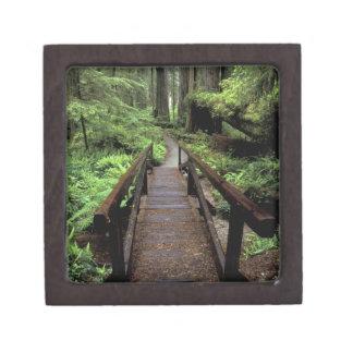 NA, USA, California, Jedidiah Smith Redwoods Jewelry Box