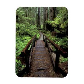 NA, USA, California, Jedidiah Smith Redwoods Magnet