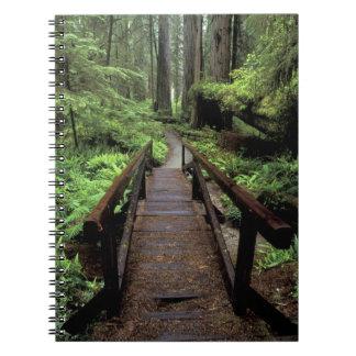 NA, USA, California, Jedidiah Smith Redwoods Notebook