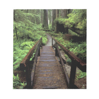 NA, USA, California, Jedidiah Smith Redwoods Notepad