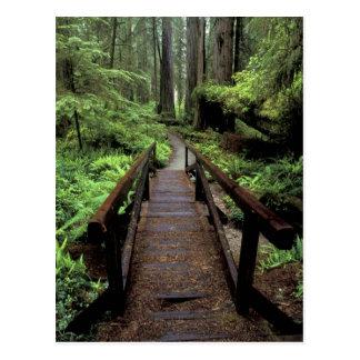 NA, USA, California, Jedidiah Smith Redwoods Postcard