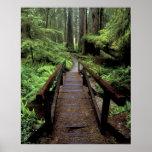 NA, USA, California, Jedidiah Smith Redwoods Poster
